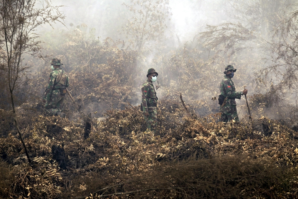 epa04946616 Indonesian Officers on burned peat land during Indonesian President, Joko Widodo, inspects their work of emergency services putting out forest fires in the village of Sakakajang,Jabiren, Pulang Pisau, Central Borneo, Indonesia, 24 September 2015. Accoridng to local officials Indonesian authorities have suspended the operations of four plantation companies over forest fires on Sumatra island. Police were questioning officials from two of the domestic companies for possible criminal prosecution, said Muhammad Yunus, Director for Enforcement at the Ministry of Forestry and the Environment, witht he penalty for causing pollution being up to five years in prison. Haze from forest fires on Sumatra and the Indonesian part of Borneo island is an annual hazard which authorities have blamed on the illegal practice of open burning by small farmers and plantation companies. burning by small farmers and plantation companies. EPA/BAGUS INDAHONO