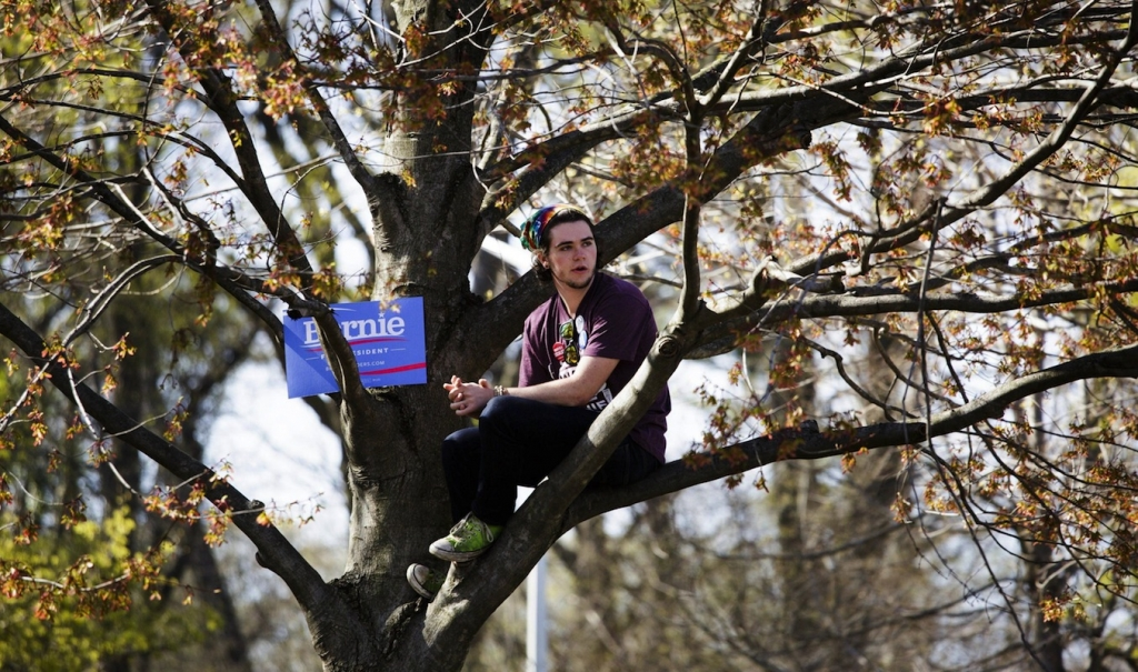 epa05264737 A Sanders supporter sits up in a tree hoping to see Democratic presidential candidate Sen. Bernie Sanders during a campaign rally in Prospect Park in Brooklyn, New York, USA, on 17 April 2016. New York will hold its primary election on 19 April 2016. EPA/JUSTIN LANE